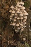 Группа крошечных грибов Стоковые Фотографии RF