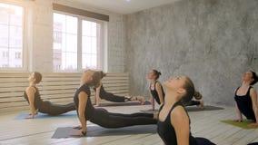 Группа людей ослабляя и делая йогу, практикуя ухудшающуюся собаку Стоковое Изображение