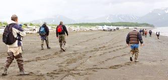 Группа медведя Аляски осматривая строгает здравствуйте! залива Стоковая Фотография