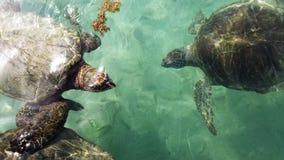 Группа морской черепахи Стоковое Изображение RF
