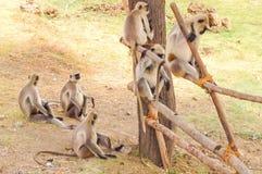 Группа обезьяны Стоковые Изображения RF