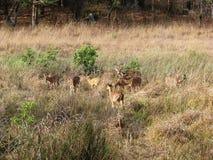 группа оленей стоковая фотография rf