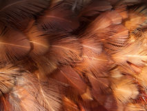 группа пера Стоковая Фотография RF