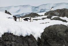 Группа пингвина на снеге Стоковое Изображение