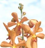 Группа померанцовых орхидей Стоковое фото RF