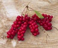 Группа плодоовощей лозы Schisandra магнолии chinensis Стоковые Изображения