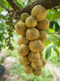 Группа плодоовощ wollongong Стоковое Изображение