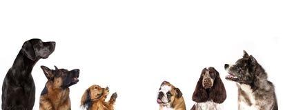Группа собаки смотрит вверх Стоковые Изображения RF