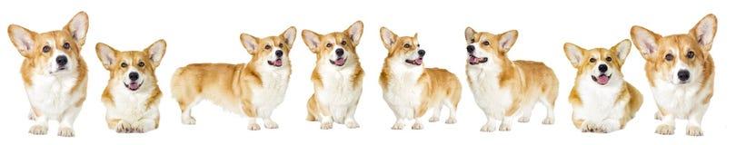 Группа собаки смотрит на белой предпосылке Стоковые Изображения