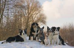 группа собак Стоковое Фото