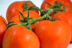 Группа томата Стоковые Изображения