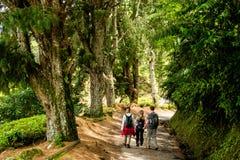 Группа людей идя на след в гористых местностях Камерона Стоковые Фото