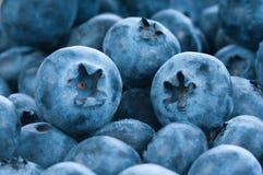 группа ягод голубая свежая стоковая фотография