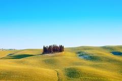 Группа Cypress и ландшафт поля. Orcia, Тоскана Стоковое Фото