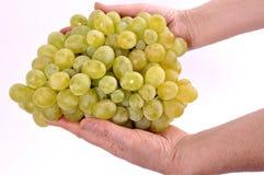 Группы виноградин в руках женщины на белой предпосылке Стоковое фото RF
