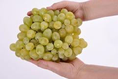 Группы виноградин в руках женщины на белой предпосылке Стоковые Изображения RF