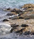 Группы в составе наяды и мидии на утесах морем стоковая фотография rf