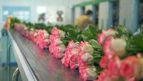 Группы в составе розы на конвейерной ленте видеоматериал