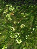 Группы в составе цветки Стоковое Изображение