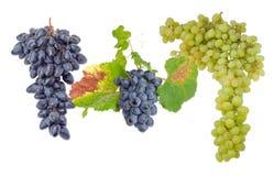 3 группы различных виноградин таблицы на светлой предпосылке Стоковые Изображения RF