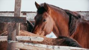 Грустная лошадь стоит в табуне сток-видео