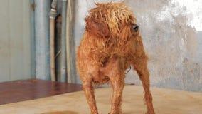 Грустная собака в укрытии ждать быть спасенным и принятым к новому дому Укрытие для концепции животных акции видеоматериалы