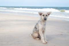 Грустная собака стороны сидя на пляже стоковые изображения rf