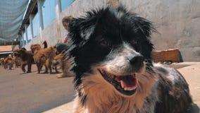 Грустные собаки в укрытии ждать быть спасенным и принятым к новому дому Укрытие для концепции животных сток-видео