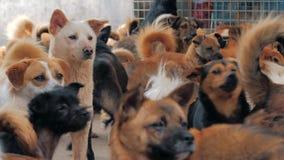 Грустные собаки в укрытии за загородкой ждать быть спасенным и принят видеоматериал
