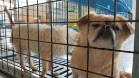 Грустные собаки в укрытии за загородкой ждать быть спасенным и принятым к новому дому Укрытие для концепции животных акции видеоматериалы