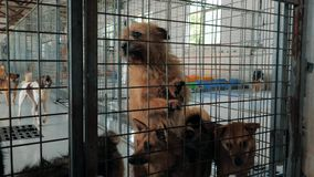 Грустные собаки в укрытии за загородкой ждать быть спасенным и принятым к новому дому Укрытие для концепции животных видеоматериал