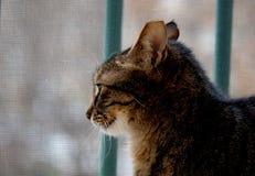 Грустный сиротливый кот ждет стоковая фотография