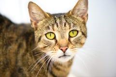 Грустный смотря кот как раз хочет дом вечности стоковые фотографии rf