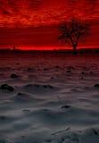 Груша дерева зимы Стоковые Изображения RF