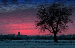 Груша дерева зимы Стоковые Фото