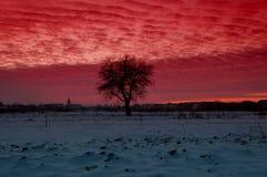 Груша дерева зимы Стоковые Фотографии RF