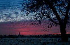 Груша дерева зимы Стоковая Фотография RF