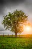 Груша дерева Стоковые Изображения