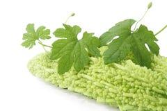 груша листьев бальзама Стоковые Фото