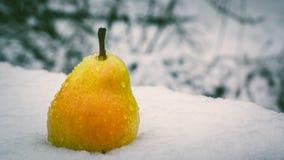 Груша на снеге Стоковые Изображения