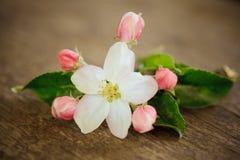 груша цветения Стоковое Изображение