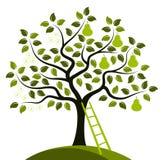 Грушевое дерев дерево в 2 сезонах Стоковое Изображение RF