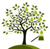 Грушевое дерев дерево в 2 сезонах Стоковое Фото