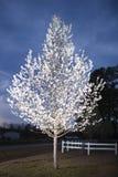 Грушевое дерев дерево в цветени Стоковые Фотографии RF