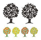 Грушевое дерев дерево и яблоня. Стоковая Фотография RF