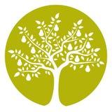 Грушевое дерев дерево Стоковая Фотография RF
