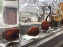 Груши в бутылках подготовить ликер стоковое изображение