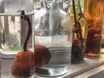 Груши в бутылках подготовить ликер стоковое изображение rf