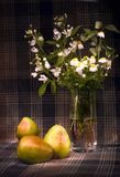 груши маргариток Стоковые Изображения RF
