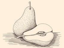 Груши нарисованные рукой Стоковое Изображение